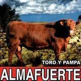 Print and download Toro y pampa sheet music in pdf. Learn how to play Almafuerte songs for Electric Guitar, Bass and Drumset online